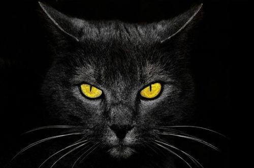 Кто раскроет тайну масонской ложи «черных котов»?